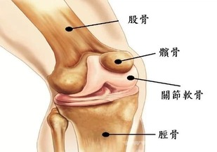PBT膝關節