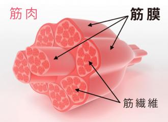 筋膜球放鬆